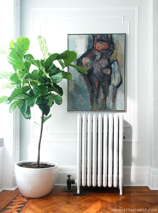 tough kitty puffs fiddle leaf fig. Black Bedroom Furniture Sets. Home Design Ideas