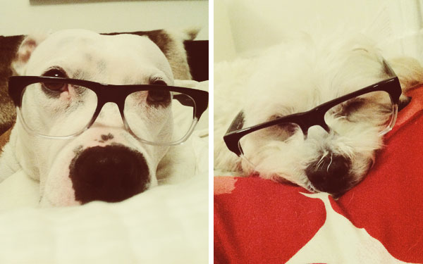 ff0f96a97487 Mekko and Linus are in full support of Fetch Eyewear. Now go get yourself  some free glasses